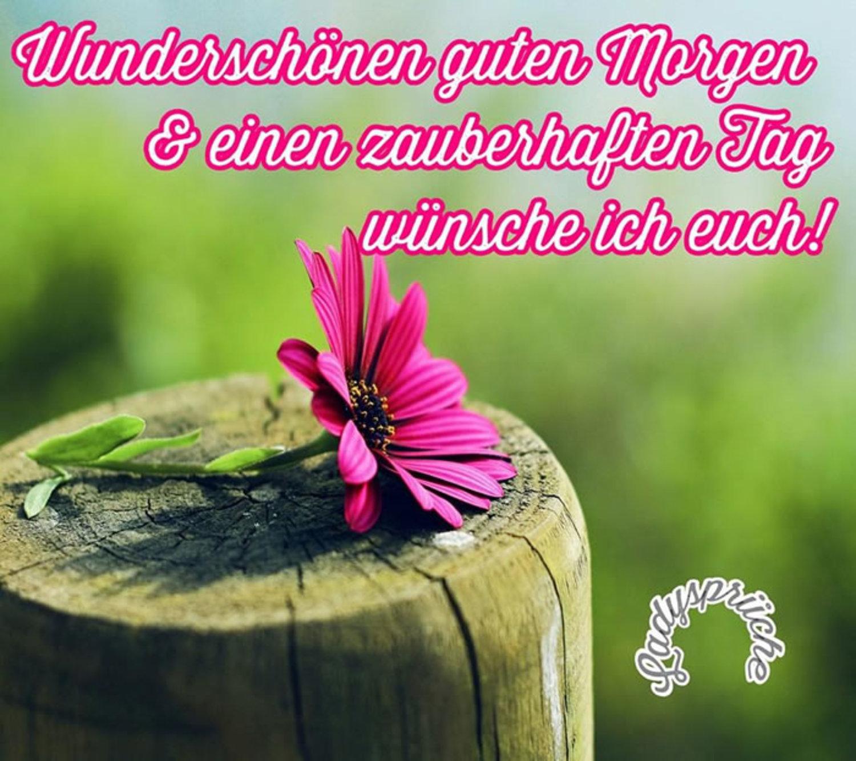 Fotos Whatsapp Guten Morgen 649 Gbpicsbildercom