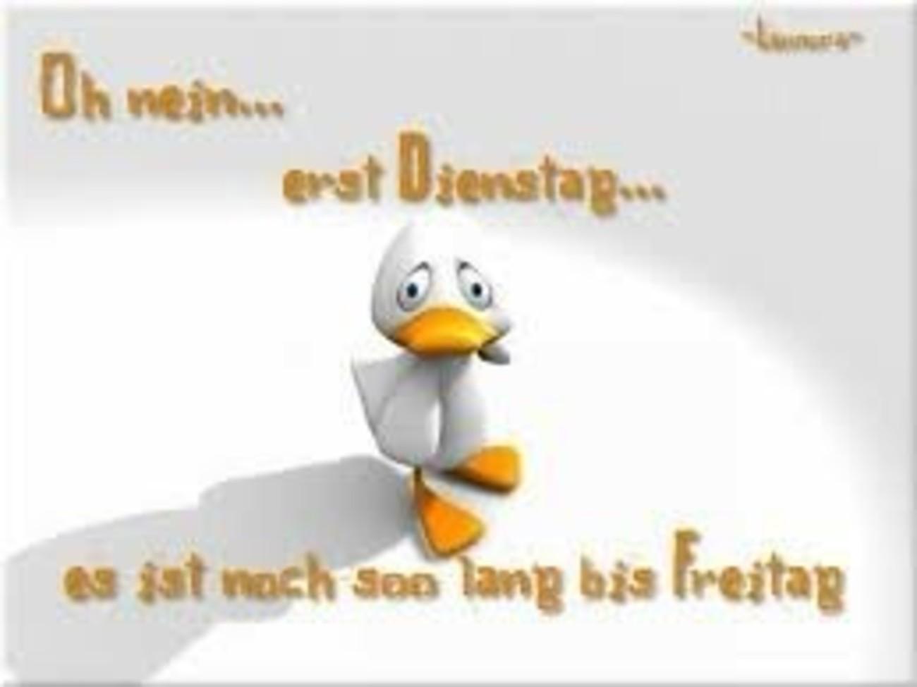 Guten Morgen Schönen Dienstag Freunde 99 Gbpicsbildercom