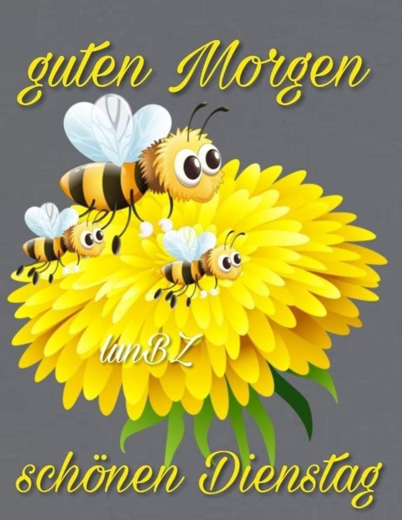 Guten Tag Schönen Dienstag Gbpicsbildercom
