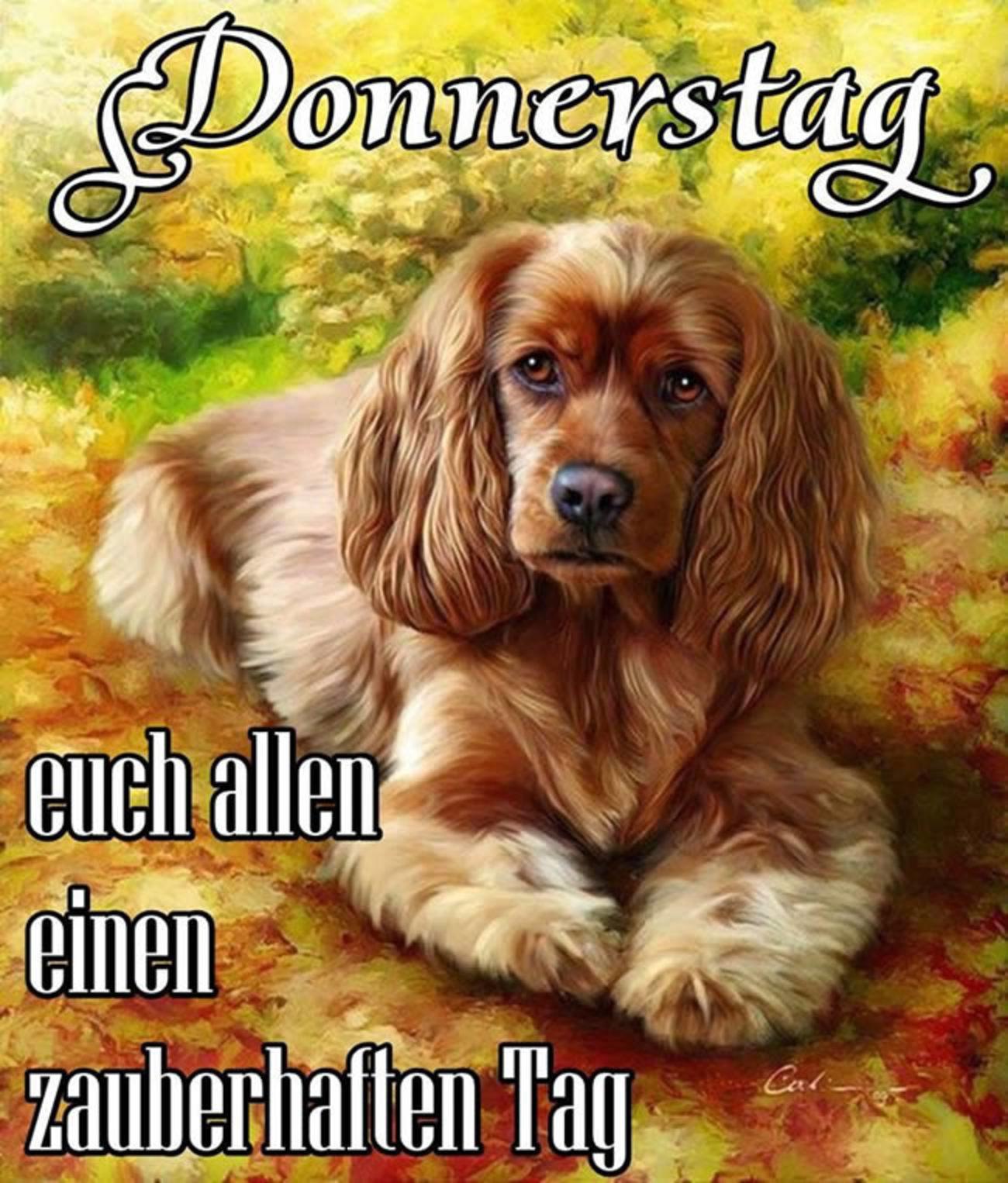 Schönen Donnerstag Hund Gbpicsbildercom