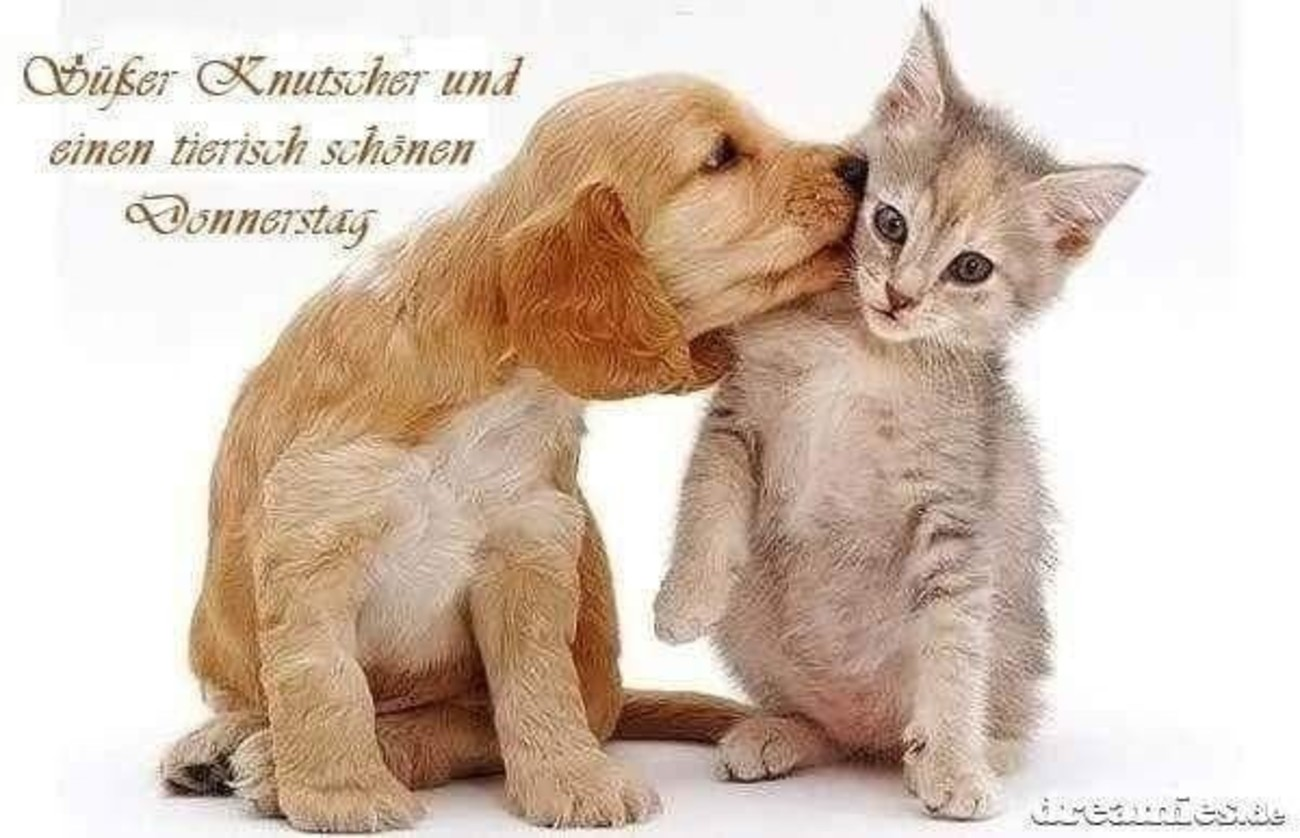 Schönen Donnerstag Mit Katzen 124 Gbpicsbildercom