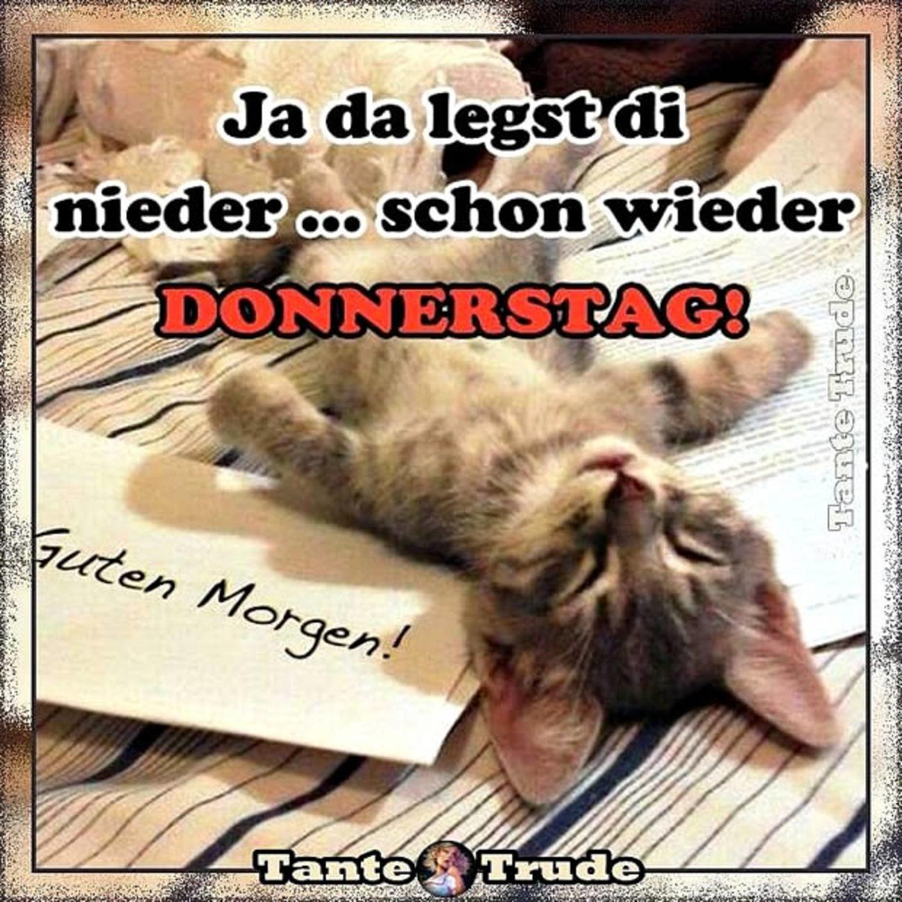 Schönen Donnerstag Mit Katzen 81 Gbpicsbildercom
