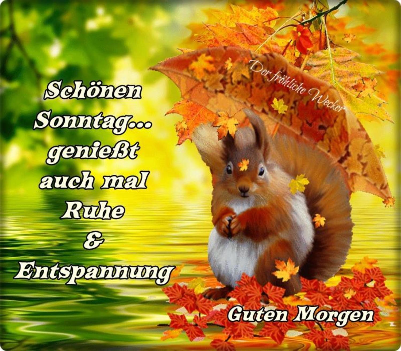 Sonntag whatsapp schönen Sonntag Whatsapp