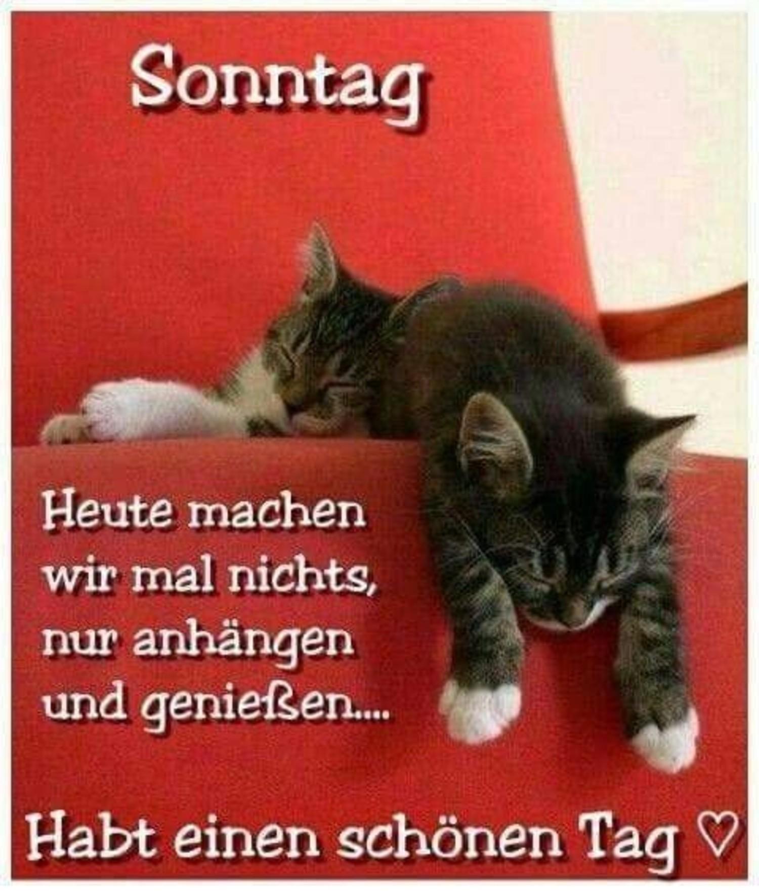Schönen Sonntag Bilder Katzen 182 Gbpicsbildercom