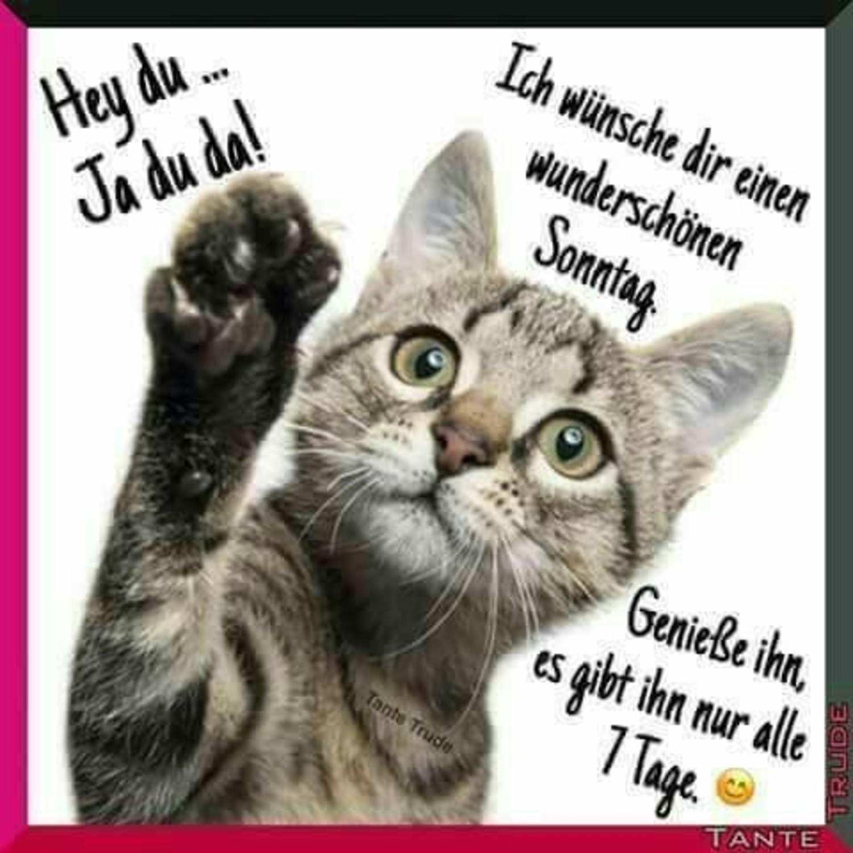 Schönen Sonntag Bilder Katzen Gbpicsbildercom